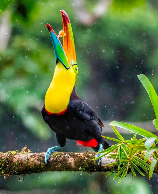 a guide to the birds of costa rica